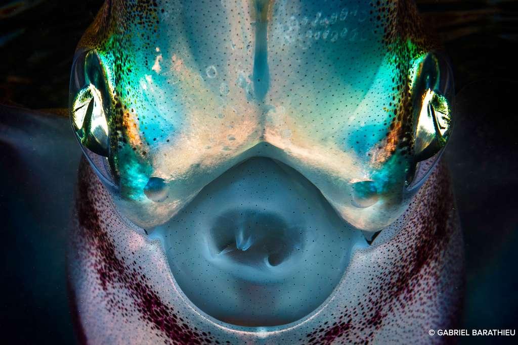 En tête à tête avec un calamar