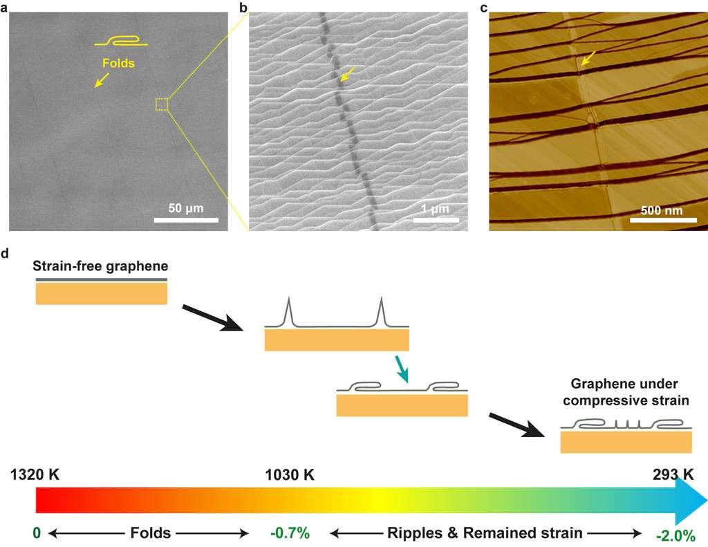 Sur cette illustration, les chercheurs de l'Ulsan National Institute of Science and Technology (Unist, Corée du Sud) montrent comment des plis se forment dans des films de graphène pendant le processus de refroidissement après croissance sur une feuille de Cu (111). © Unist