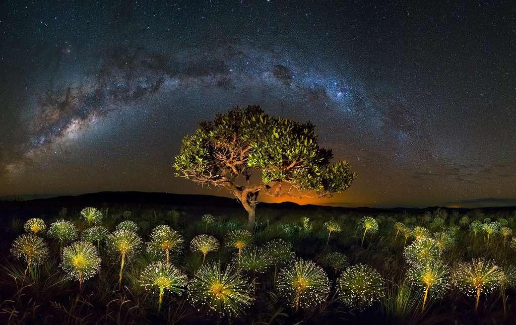 La nature du Cerrado, un feu d'artifice végétal