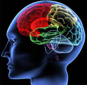 La musique aurait pu parasiter les structures du cerveau sélectionnées pour le langage. © V. Yakobchuk Fotolia