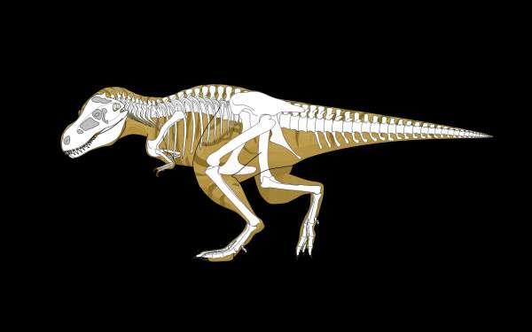 Squelette de Tyrannosaurus rex