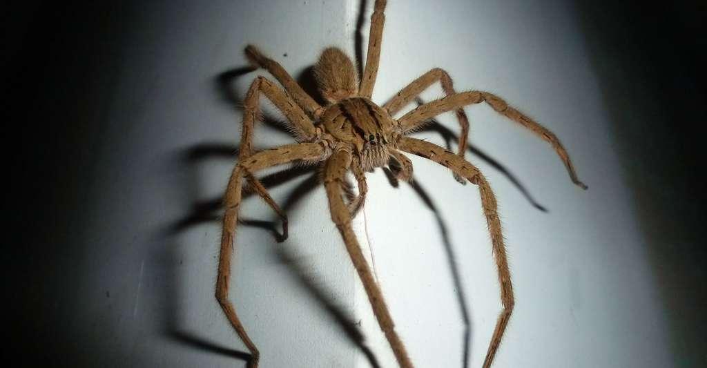 Phobie des araignées. © Lolaclinton, CCO