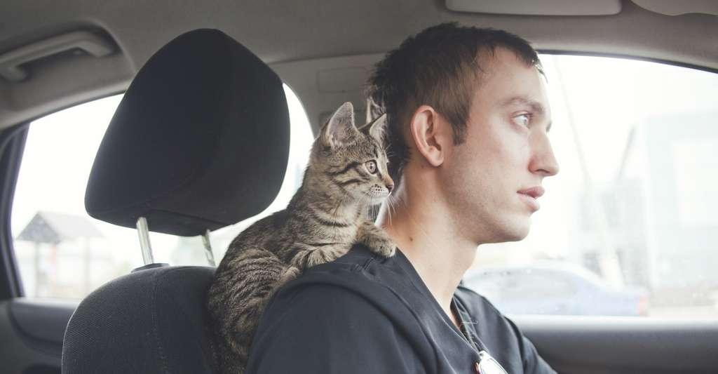 De manière générale, une conduite souple — pas d'à coups, de virages secs ou de freinages brutaux — aidera votre animal à ne pas souffrir de mal des transports. Tout comme une bonne ventilation de la voiture. © Cozy nook, Fotolia