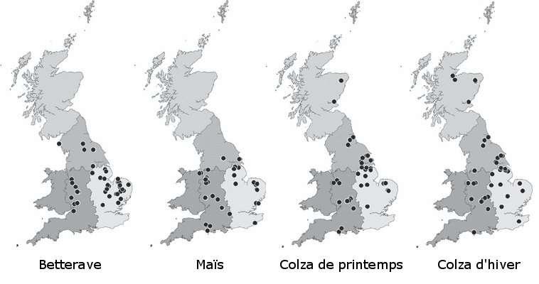 L'étude a porté sur des champs de betterave, maïs et colza en Grande-Bretagne. Près de 200 champs ont fait l'objet de recensement de carabidés et de graines. © Dohan et al., 2011 - adaptation Futura-Sciences