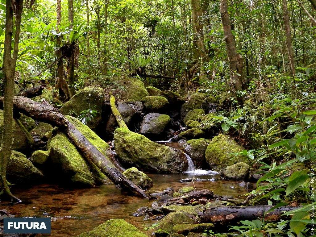 Forêt tropicale Parc National de Masoala - Madagascar