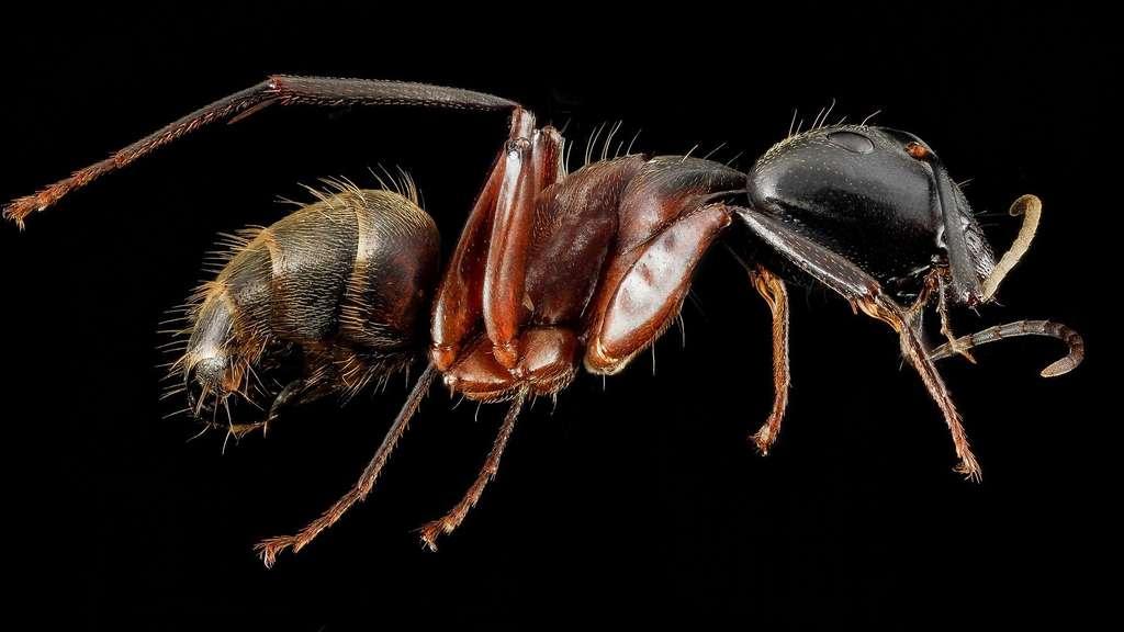 La division du travail chez les fourmis