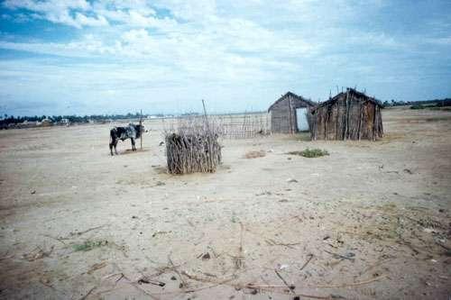 Habitat spontané pauvre et élevage sur un tanne. Nous sommes ici à Tuléar (Toliara), capitale provinciale du Sud-ouest de Madagascar. © JM Lebigre Reproduction et utilisation interdites