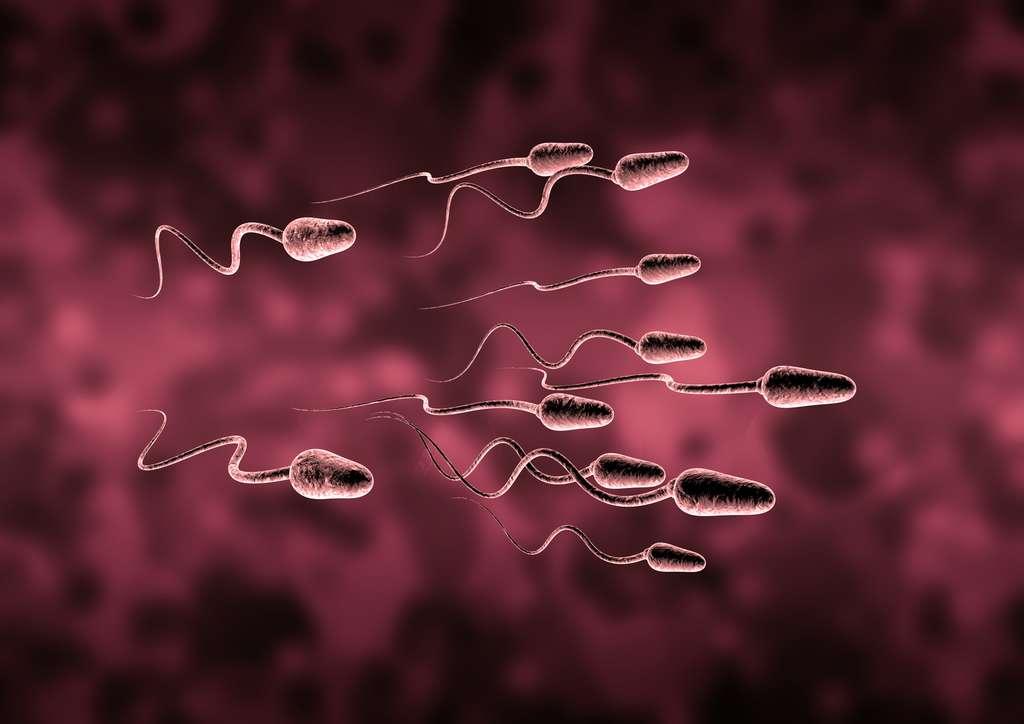 La qualité et la quantité de sperme est en baisse dans tous les pays occidentaux. © ThorstenSchmitt, Fotolia