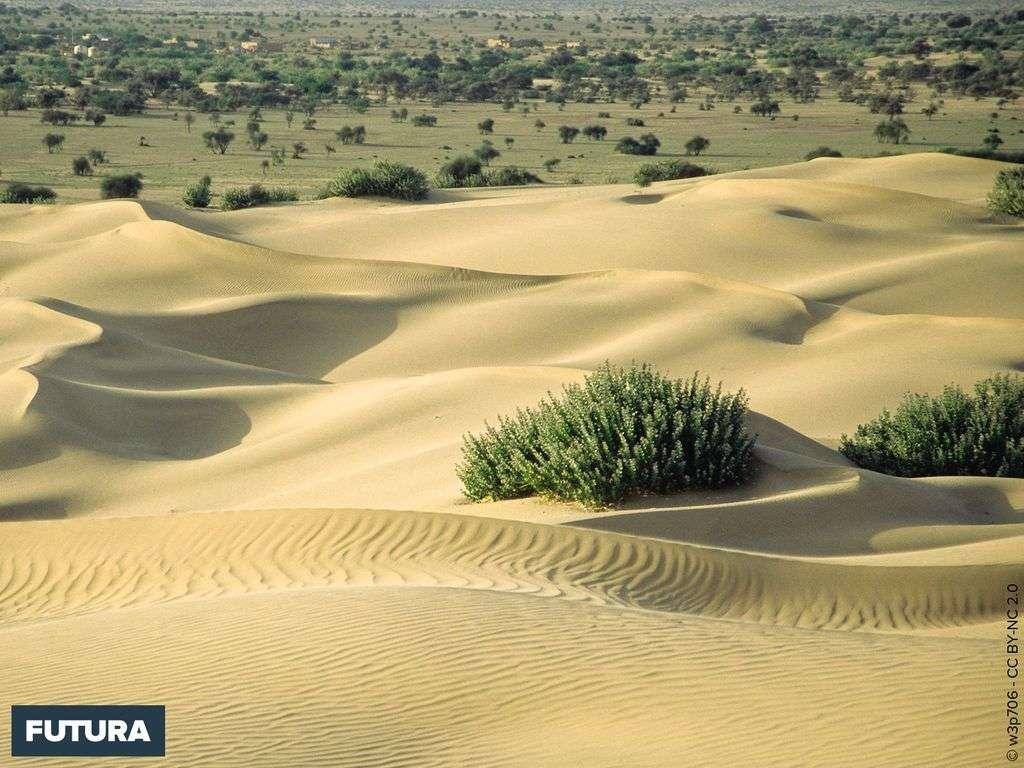 Désert de Kuri - Pakistan
