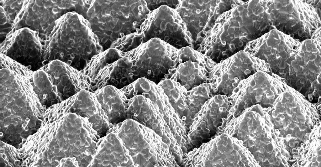 Jusqu'alors, les cellules solaires photovoltaïques à double jonction silicium/pérovskite manquaient d'efficacité, car les pyramides que l'on trouve sur les cellules silicium devaient être aplanies avant dépôt de la cellule pérovskite. Le tout au détriment de leurs propriétés optiques. © EPFL