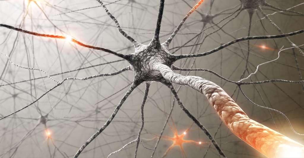 Les axones ont pu repousser grâce à l'approche utilisée par les chercheurs. © ktsdesign, Shutterstock