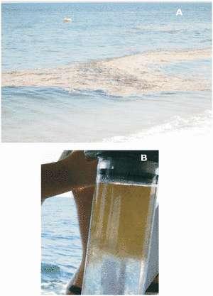 En haut, bande de mucilage sur la côte, en bas, un échantillon de mare sporco (mer sale), où l'on distingue bien le mucilage en surface. © Danovaro et al. CC