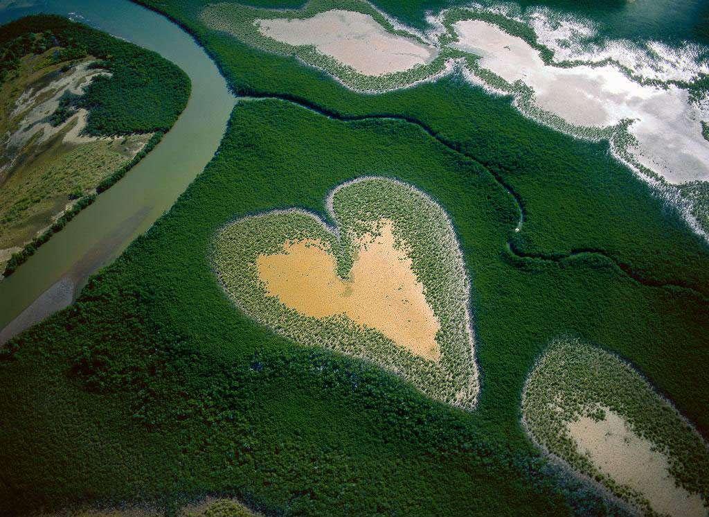 Coeur de Voh en 1990, Nouvelle-Calédonie, France (20°56'S - 164°39'E). La mangrove, forêt mi-terrestre mi-aquatique, se développe sur les sols vaseux tropicaux exposés aux alternances de marées. Constituée de diverses plantes halophytes (capables de vivre sur les sols salés), avec une prédominance de palétuviers, elle tapisse près d'un quart des côtes tropicales et couvre environ 15 millions d'hectares à travers le monde, la moitié de son étendue originelle. © Yann Arthus-Bertrand - Tous droits réservés