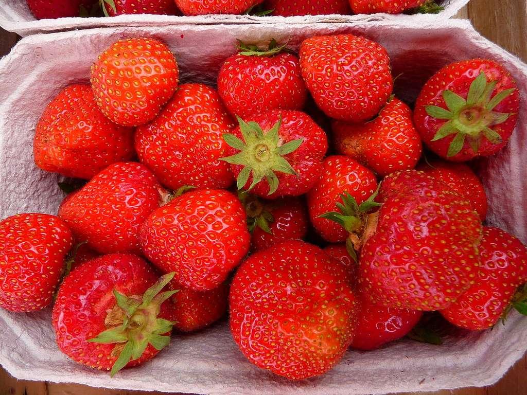 Les fraises en barquettes pourraient être toxiques. Différents pesticides, y compris certaines molécules interdites, ont été retrouvés sur ces fruits par l'association Générations Futures. © 3268zauber, Wikipédia, cc by sa 3.0