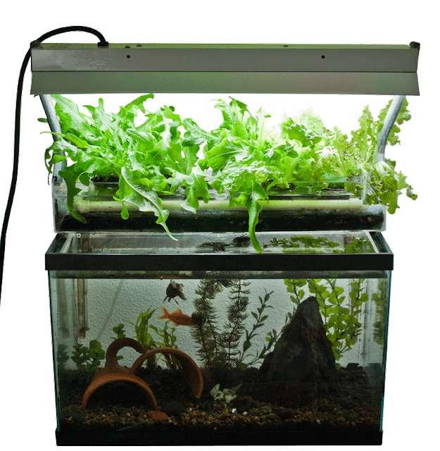 L'aquaponie peut aussi se pratiquer de manière « industrielle » dans de véritables fermes. © freepng, DP