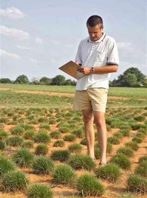 La gestion des ressources génétiques est un travail d'expert. Les sélectionneurs participent à cette gestion. Exemple des plantes fourragères © GNIS