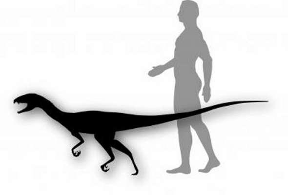 Daemonosaurus chauliodus devait avoir la taille d'un gros chien et marchait sur ses pattes arrière, comme les théropodes. © Smithsonian