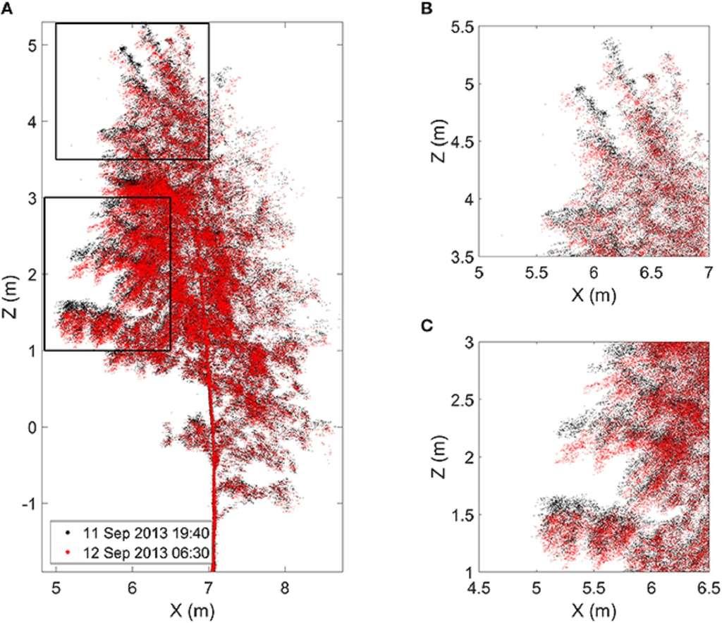 Évolution de la position de différents points pris sur l'arbre finlandais le soir (en noir) et le lendemain matin (en rouge). À droite, zooms sur le haut (B) et le bas (C) de la cime. © Puttonen et al. 2016, Frontiers in Plant Science.