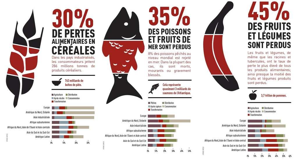 30 % de la production de céréales, 45 % des fruits et légumes et 35 % des poissons sont perdus pour la consommation. © FAO