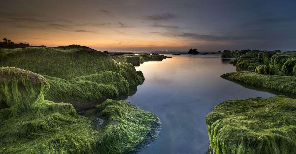 Les algues abritent la vie. © Quangpraha, Pixabay, DP