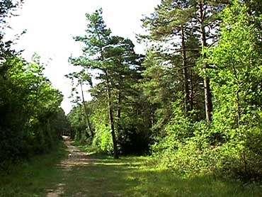 Forêt Fontainebleau