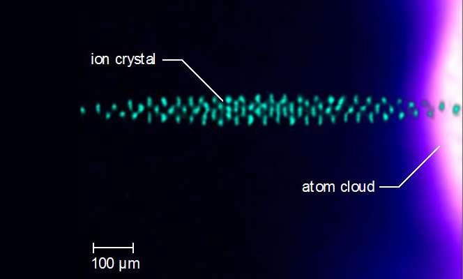 Cette illustration montre l'échantillon microscopique d'ions de baryum (ion crystal, en anglais sur l'image) que les physiciens de la UCLA ont immergés dans un nuage d'atomes de calcium (atom cloud) à une température à peine au-dessus du zéro absolu. © Alex Dunning, UCLA