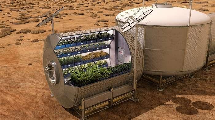 Les astronautes de l'ISS ont fait pousser des salades en micropesanteur, dans le cadre de l'expérience Veg-01. Cette prouesse pourrait profiter aux futures missions habitées vers Mars. Les astronautes seraient en mesure de cultiver dans leur vaisseau spatial pendant le voyage, puis sur la Planète rouge elle-même, sachant que la pesanteur martienne vaut seulement 38 % de la pesanteur terrestre. © Nasa