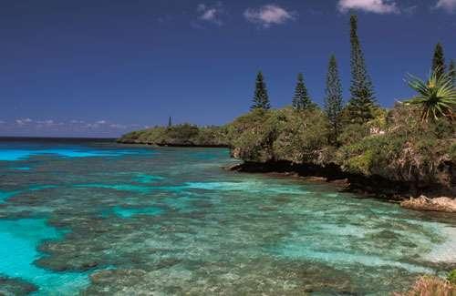 Nouvelle Calédonie - Vue sur la côte ouest de l'île de Maré (Iles Loyauté) : quelques pins colonnaires au-dessus de l'encoche marine actuelle. © IRD - Wirrmann, Denis
