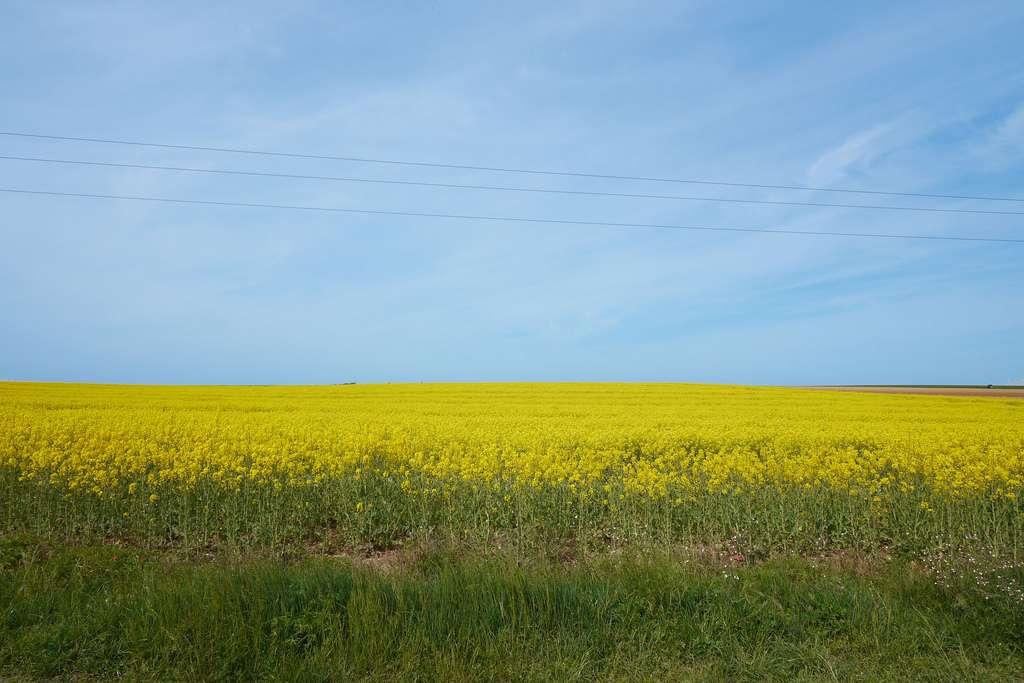 Les organismes peuvent devenir des sources d'énergie, c'est ce qu'on appelle la biomasse. Quand il s'agit d'organismes végétaux, on parle donc de biomasse végétale. © ouestcommunicationcom, Flickr, CC by-nc-nd 2.0