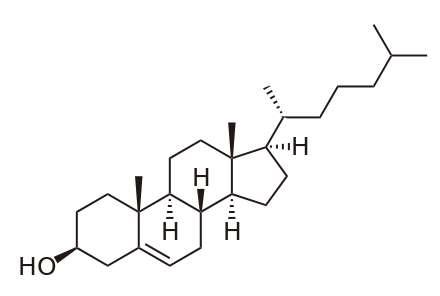 Le cholestérol est une longue molécule de formule C27H46O. Elle joue de nombreux rôles dans l'organisme, servant notamment de précurseurs aux hormones stéroïdes comme la testostérone ou l'estradiol. © Boris TM, Wikipédia, DP