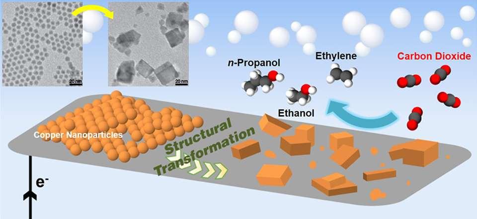 Ce schéma présente l'action du catalyseur développé par les équipes du Berkeley Lab. Ce dernier se trouve d'abord sous forme de nanobilles de cuivre (à gauche sur le schéma) ; il subit une transformation structurelle et prend ensuite une forme de cubes (à droite). Le CO2 injecté (à droite) est alors transformé en éthylène, en éthanol et en propanol (Ethylene, Ethanol et n-Propanol, en anglais sur le schéma). En haut à gauche, des images du catalyseur au microscope électronique à transmission. © Dohyung Kim, Berkeley Lab