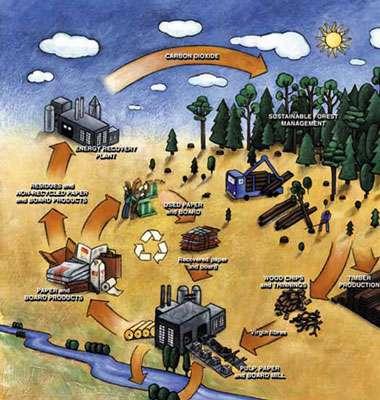 Cycle du carbone dans l'industrie du papier © energymanagertraining.com