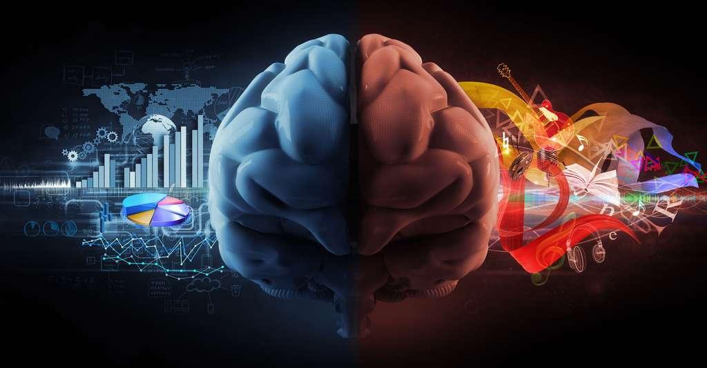Testez vos connaissances sur le cerveau. © Adimas, Fotolia