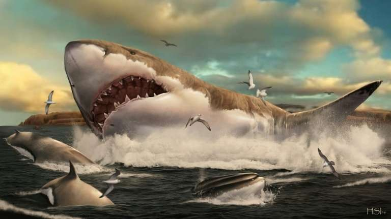 Vue d'artiste représentant un Otodus megalodon, l'ancêtre préhistorique du requin blanc. © Hugo Salais, Metazoa Studio, AFP