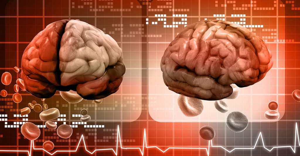 Cerveau humain. © Ramcreations, Shutterstock