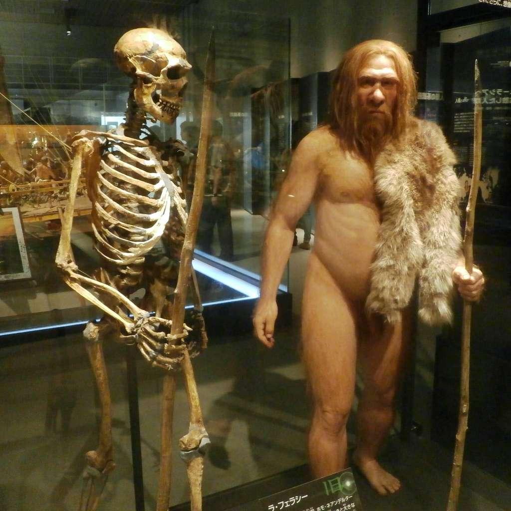 Modélisation d'un néandertalien à côté de son squelette. Exposition du Musée national de la nature et des sciences de Tokyo. © Photaro, Wikipedia, CC by-sa 3.0