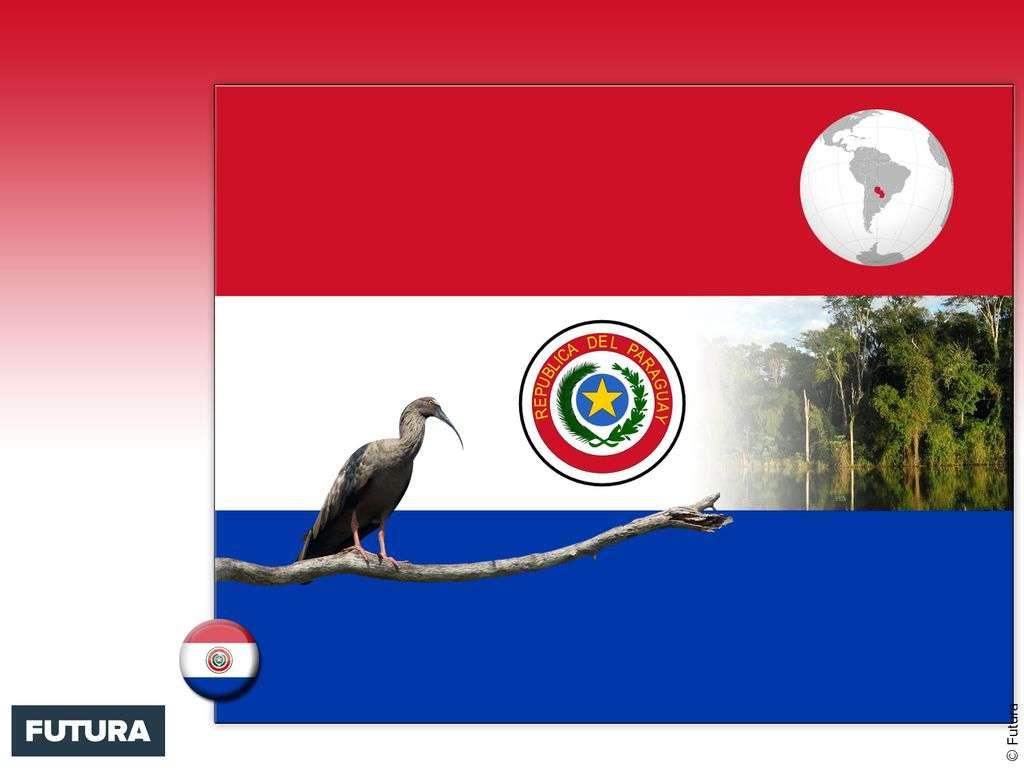 Drapeau : Paraguay