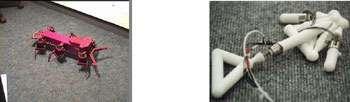 Hexapod (AnimatLab, à gauche) a fait évoluer un « cerveau » pour pouvoir marcher et Golem (Brandeis University, à droite) a conçu par évolution à la fois une morphologie et son « cerveau » qui lui permettent de ramper. © DR