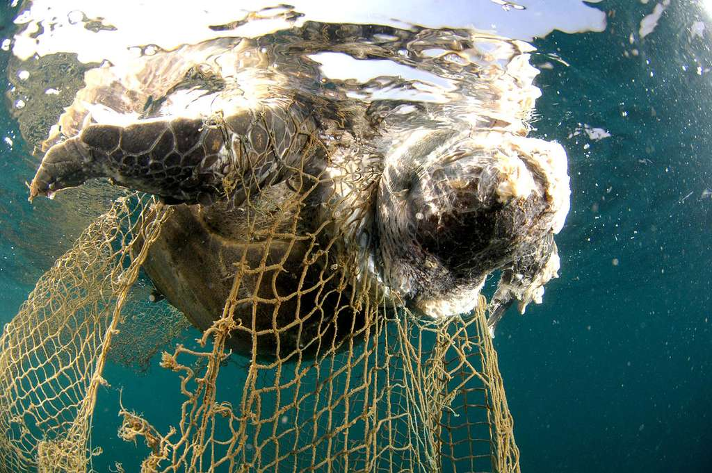 Tortue tartaruga morte, prise dans les filets dérivants. © Salvatore Barbera, CC by-nc 2.0
