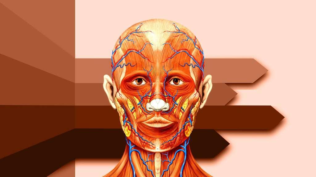 Anatomie de la tête vue de face