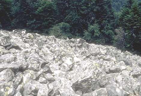 Disposition des blocs en surface du chirat. Noter les blocs redressés nombreux en surface et la structure openwork. Chirat desTrois dents, (cl B.E., juin 1972).