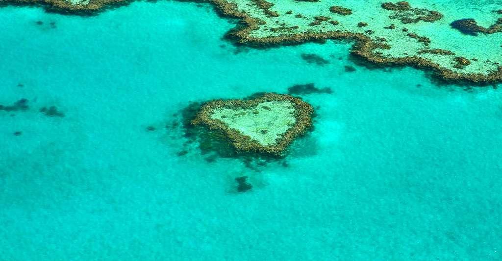 La Grande Barrière de corail et son coeur, est un monde à part qui montre à quel point la nature fait bien les choses… © Alicia3690, domaine public