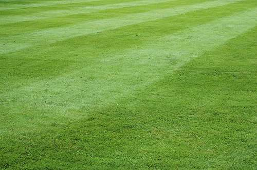 La pelouse, tendance des jardins de demain. © Vanou / Flickr - Licence Creative Common (by-nc-sa 2.0)