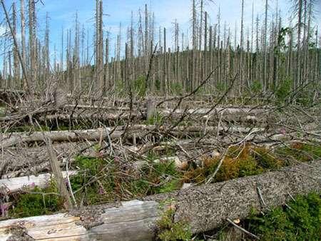 Mort des forêts