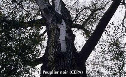 © CEPA Reproduction interdite sans autorisation de l'auteur