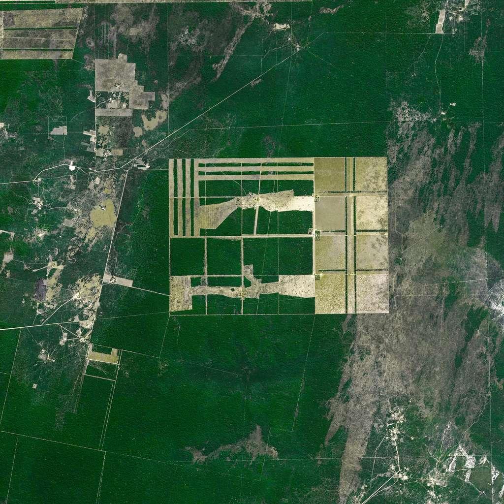 Image satellite acquise par le satellite Spot 5 montrant le niveau de la déforestation dans l'État de Santiago del Estero, en Argentine. Les données de Biomass seront utilisées par les agences nationales et internationales chargées de contrôler les zones légales et illégales de déforestation. © Cnes, distribution Airbus DS