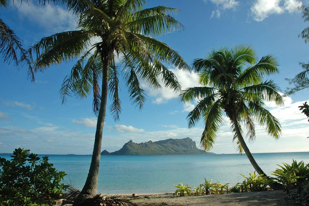 L'île de Raivavae vue entre deux cocotiers
