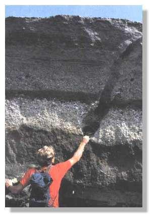 Vision d'ensemble des dépôts de l'éruption de 79 à Terzino. La personne a la main posée sur le paléosol, dans la trace d'un tronc d'arbre. Le premier lit marron clair fait environ cinq centimètres et correspond à l'épisode phréatomagmatique par lequel débuta l'éruption Cliché Sigurdsson et al, 1985