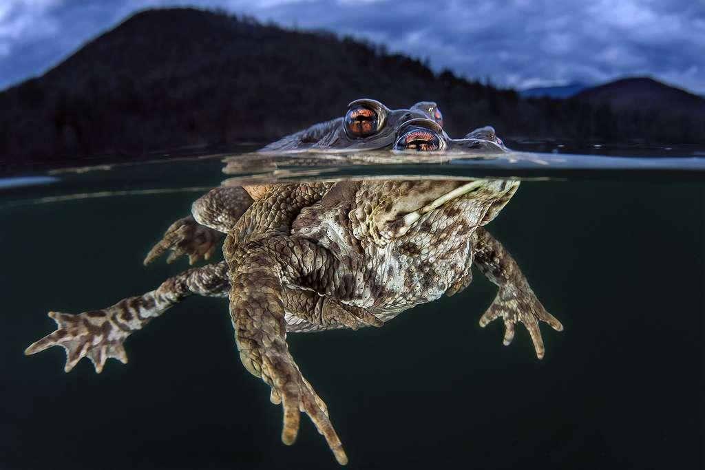 Crapauds (Italie). © Claudo Zori, Ocean Art