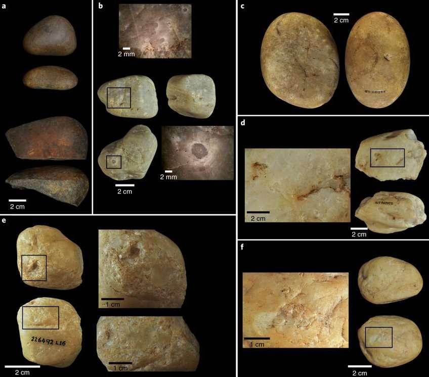 Exemples d'outils en pierre utilisés par les singes capucins du Brésil depuis 3.000 ans. © University College London